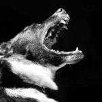 troubles du comportement chez les chiens