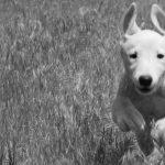 Balades éducatives canines